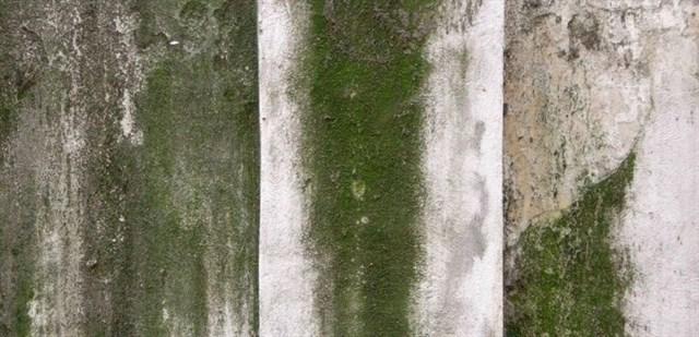 Ba Hậu Quả Nghiêm Trọng Đến Sức Khoẻ Nếu Không Xử Lý Rêu Mốc Tường